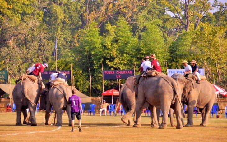 Elephant Polo In Nepal | World Elephant Polo Association